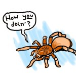 A spider, using Joey from Friends's chat-up line